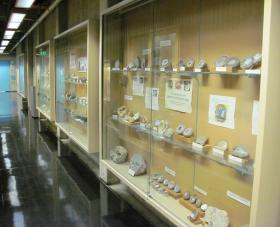 Rows of minerals on display in a hallway display case