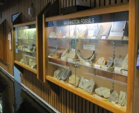 Fossils on display on the ground floor of environmental sciences